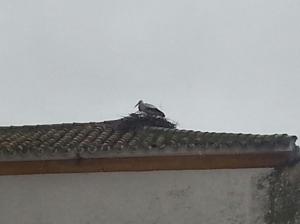 Imagen actual del tejado de la Parroquia en el que ya se ven las cigüeñas en su niddo